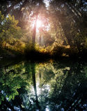 Forest reflection stock photos