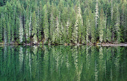 Free Forest Reflection Stock Images - 8454924