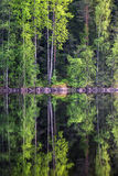 Forest reflection. Beautiful forest reflection from lake at bright summer day in Liesjärvi National Park, Finland Stock Images