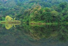 The forest reflection on the lake Royalty Free Stock Photos