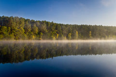 Forest reflection in the lake royalty free stock photo