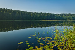 Forest reflection in the lake Stock Image