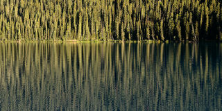 Forest Reflection On Lake Stock Foto