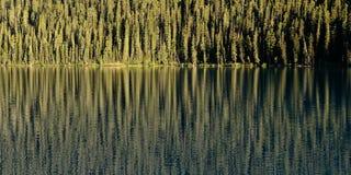 Forest Reflection On Lake Arkivfoto