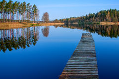 Forest reflection in the lake. Forest reflection calm lake water, the morning light Stock Images
