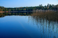 Forest reflection in the lake. Forest reflection calm lake water, the morning light Royalty Free Stock Image
