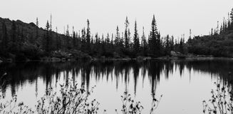 Forest reflection in the mountain lake Stock Photography