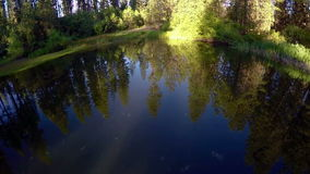 Forest reflection in a mountain pond in Idaho stock video