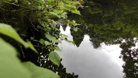 Forest reflection on pond stock footage
