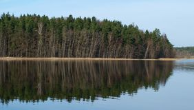 Forest reflection in a pond. South Bohemia stock photos