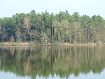 Forest reflection in a pond Royalty Free Stock Photos