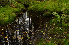Forest reflection in water autumn rain forest stream Royalty Free Stock Photography