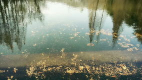 Forest reflection in water,metasequoia leave floating on lake,ripple,fir. Gh2_00761 stock footage