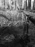 Forest reflection in water. Puddle, water, forest, mountains, Carpathians, spring, nature, trees, black and white, walk, sky, travel, tourism Royalty Free Stock Image
