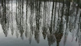 Forest reflection in water,ripple. stock video footage