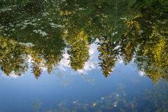 Forest reflection in water. Reflection of trees in water Royalty Free Stock Photo