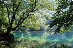 Forest reflections in lake. Location is Blue lake in Balkaria, Caucasus,Russia. Reflections of forest and trees in the lake waters Royalty Free Stock Photography