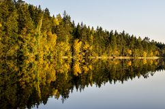 Forest Reflections. A forest reflecting on a lake on a beautiful Autumn day Royalty Free Stock Photos
