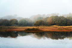 Forest Reflections Royalty Free Stock Images
