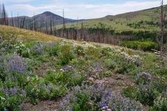 Forest Regeneration Photographie stock libre de droits