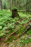 Forest Regeneration royaltyfri foto