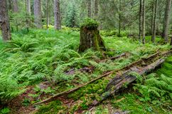 Forest regeneration Royalty Free Stock Photos