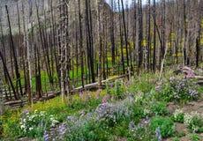 Forest Regeneration under matta av alpina blommor royaltyfri fotografi