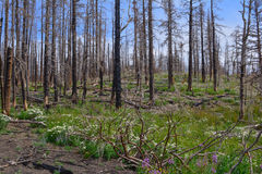 Forest Regeration Lizenzfreie Stockbilder