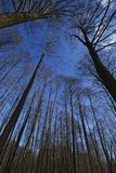 Forest relating to the blue sky. Crowns of trees in the forest relating to the blue sky Royalty Free Stock Photos