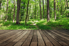 Forest relax Royalty Free Stock Image