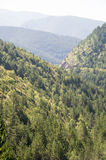 Forest reserves in western Serbia Stock Photography