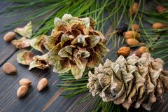 Forest resinous hulled fir-cones with fir nuts and needle branch. Es on dark wooden background Stock Photography
