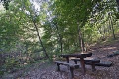 Forest resting area Stock Image