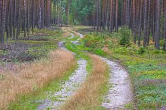 Forest road. Royalty Free Stock Photo