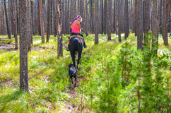 Forest Ride - Medicine Bow National Forest - Wyoming. Blonde beauty riding horse with dog following her on a horsback tour in a thickly wooded area of Medicine royalty free stock image