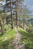 Forest ridge Stock Photography