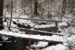 Forest rill. A forest rill flowing into a snowy stream Stock Photo