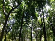 Forest of Rimba Park royalty free stock photos