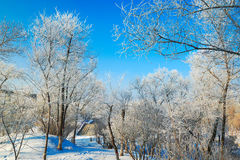 The forest with rime and snow Royalty Free Stock Photos