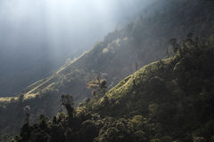 Forest Rimlight. Sunray shine above the forest on the mountain Stock Photo