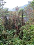Forest Rio Blanco, Colombia royalty free stock photography