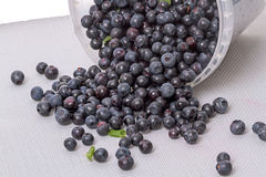 Forest ripe blueberries in a bucket Royalty Free Stock Image