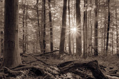 Forest with the rising morning sun Stock Images