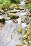 Forest River photos libres de droits
