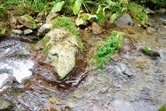 Forest River images libres de droits