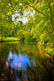 Forest and river Stock Photography