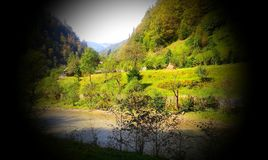 Forest River foto de archivo