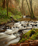 Forest river. Cascading forest river in pine forest Stock Photos
