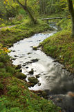 Forest river. Autumn forest in the country of Denmark Royalty Free Stock Photos