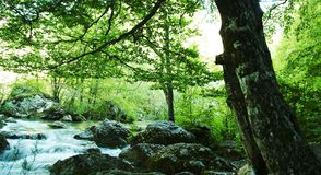 Forest river Royalty Free Stock Photos